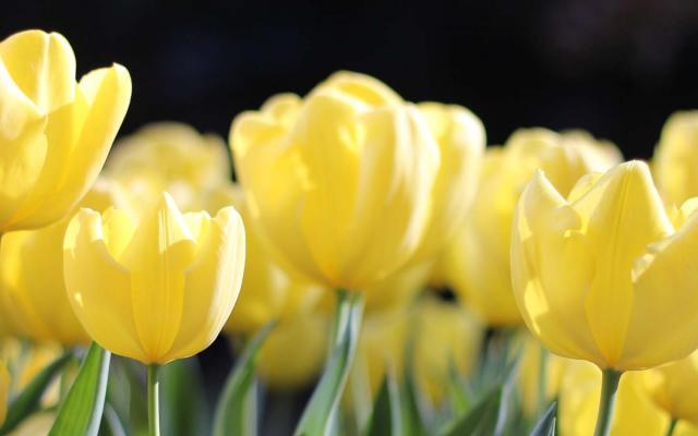 Der Frühling klopft an – badenIT wünscht frohe Ostertage!